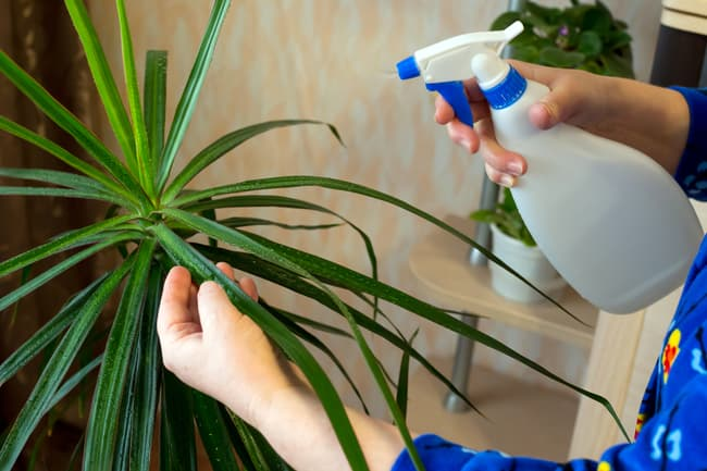 spray house plant