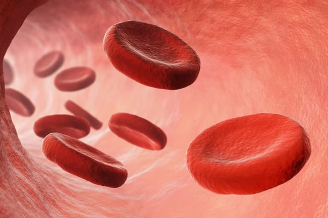 photo of blood cells