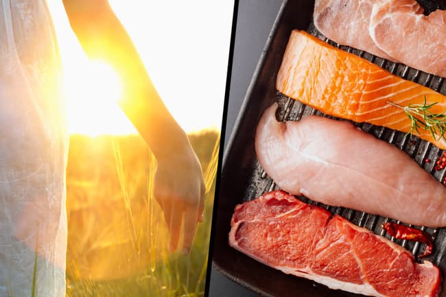 sunlight fish and meat diptyc
