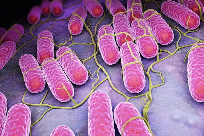 photo of salmonella bacteria
