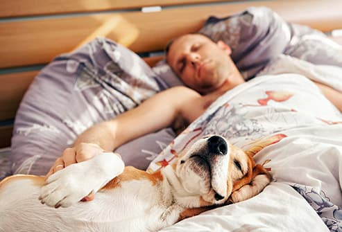 man sleeping on back beside basset hound