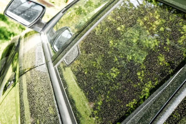 pollen on parked car