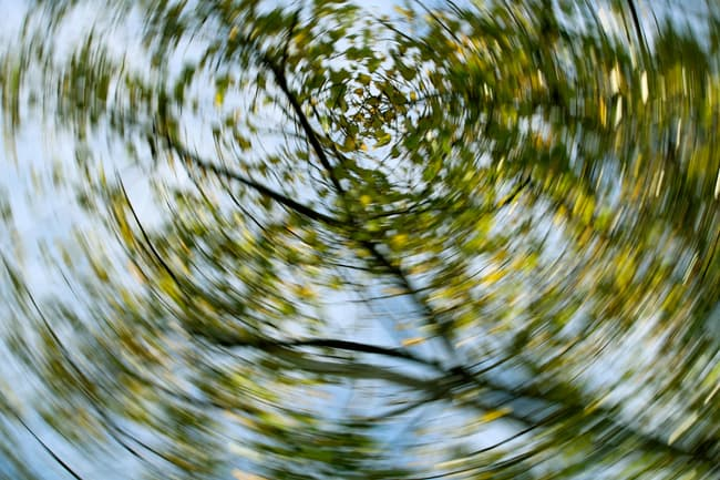 photo of spinning trees