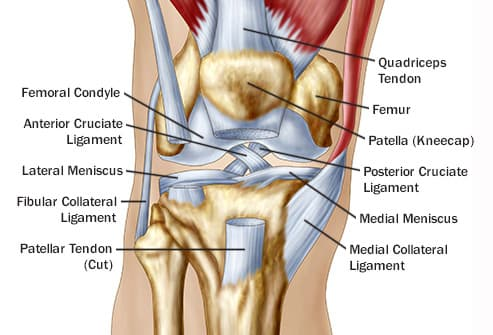 Pictures of knee pain causes why knees hurt knee anatomy illustration ccuart Choice Image