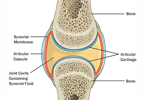 pictures why your joints are stiff and how to help them