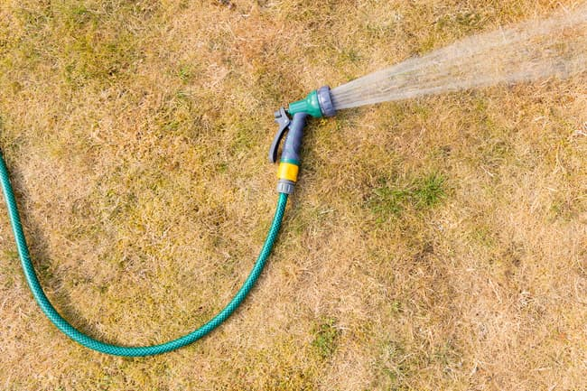 photo of water hose in dry grass