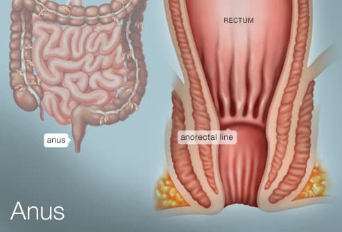 itching and discomfort near the anus