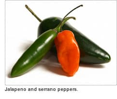 jalapeno and serrano peppers