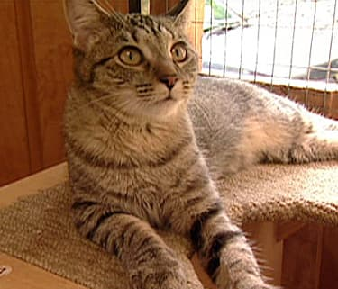 cats stung by bees