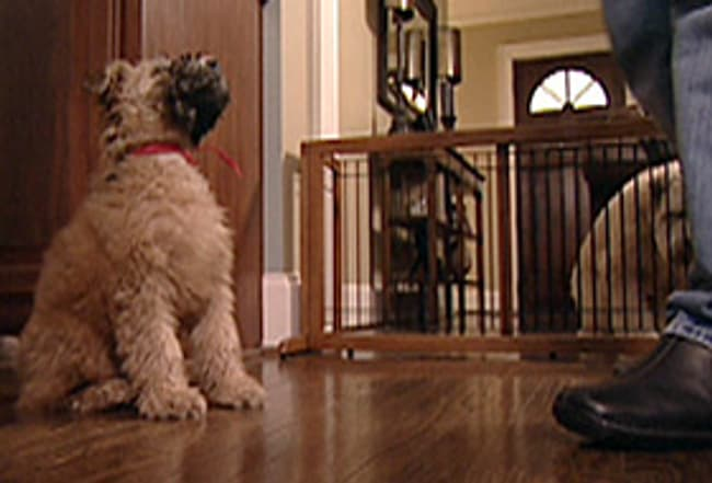 How To Housebreak Your Puppy Watch Webmd Video