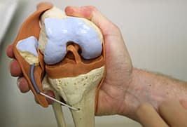 model of knee joint