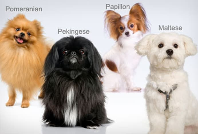 what dog breed is best for me quiz