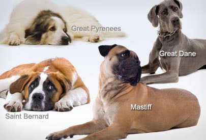All Dog Breeds A-Z