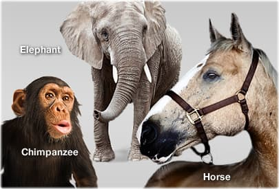 getty_rm_photo_of_horse_elephant_and_chimpanzee.jpg