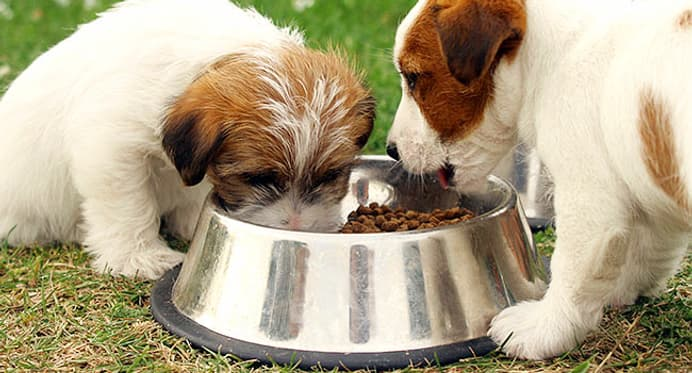 Dog Food Quiz How Much Do You Know About Feeding Your Dog