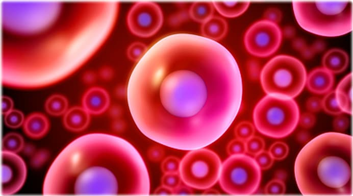 Stem Cells Facts and Quiz