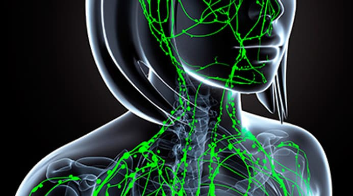 Lymph Nodes What You Should Know About These Powerful