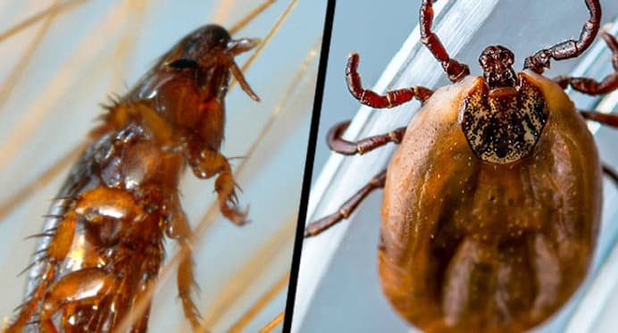 Fleas and Ticks Quiz: How Can You Stop Them From Bugging Your Pet?