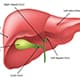 Graphic of liver